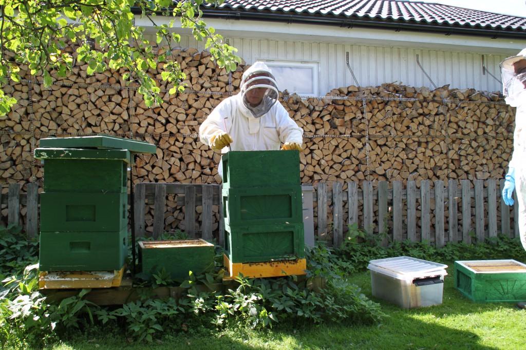 Bikuporna i Mats Aldérus trädgård